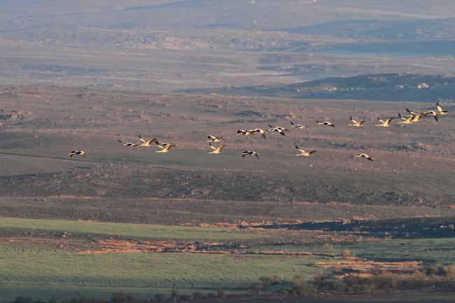 GruinExtremadura(4)