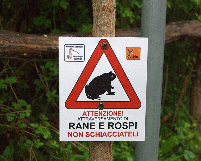 cartello anfibi